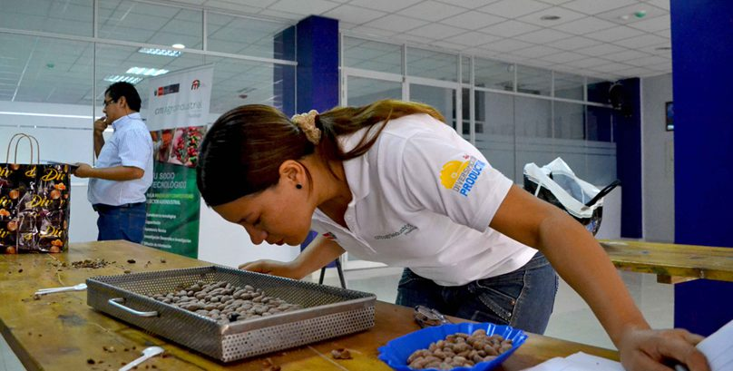 Women and young people learn to graft quality cocoa